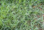 தைலம் 145x100 - 8 வித நோய்களை குணப்படுத்தும்  அறுகம்வேர்த்  தைலம்